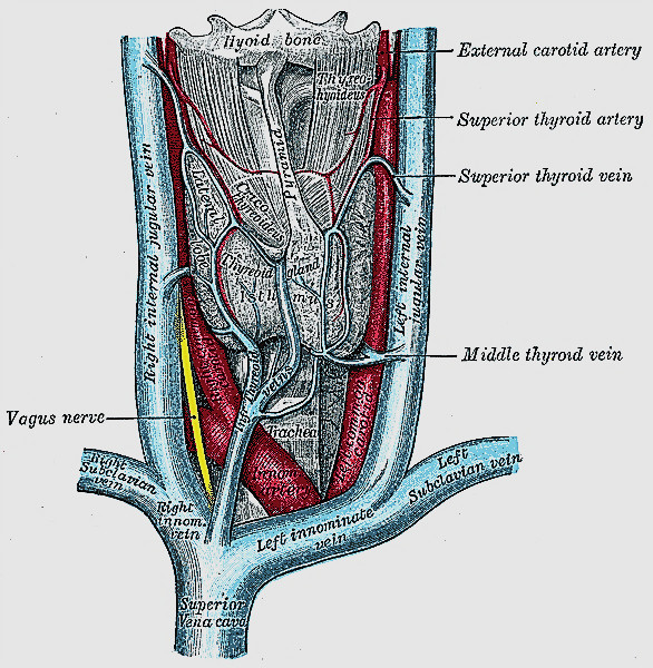 Html View Of The File Thyroidectomy